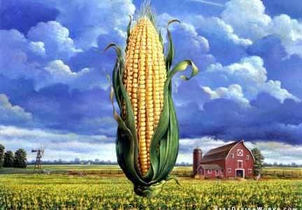 Gradska uprava za poljoprivredu i zaštitu životne sredine grada Sremska Mitrovica raspisala je Oglas za prodaju merkantilnog kukuruza roda 2016 putem prikupljanja ponuda, sa parcele poljoprivrednog zemljišta u vlasništvu Republike […]