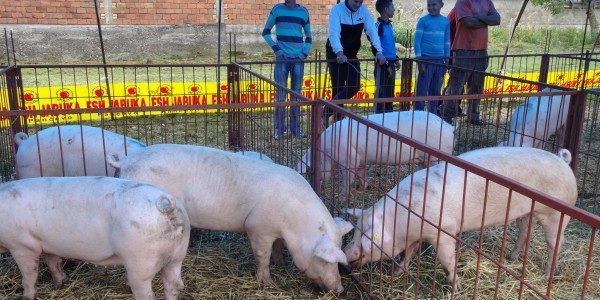 Šesnaesti Sajam svinja i poljoprivrede održaće se od drugog do četvrtog septembra u Kuzminu na platou iza Doma kulture. Ovogodišnji trodnevni Sajam ima bogat, raznovrstan program. U petak 2. septembra […]