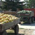 Sremci su nadaleko poznati po proizvodnji bostana. Hvale se da su njihove lubenice najkrupnije i najslađe. Ne razočaraju se previše čak i kada malo zarade, kao što je slučaj ove […]
