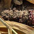 Pored suše koja je već smanjila prinose kukuruza, ovih dana šteteu usevu kukurza prave i divlje svinje. U Jazačkom ataru ima njiva na kojima će prinos biti prepolovljen. Ne pomaženi […]
