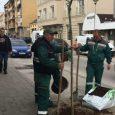 U Sremskoj Mitrovici u toku je prolećno uređenje grada. Radnici JKP Komunalije trenutno sade drveće u Masarikovoj ulici u centru Sremske Mitrovice. Ulice u kojima se vrši popuna drvoreda su […]
