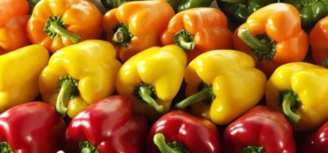 Počela je sezona paprike, na pijačnim tezgama se nalaze uglavnom babura i crvena roga, a prodavci su, za sada, zadovoljni cenom koja se kreće od 80 do 100 dinara za […]