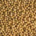 Soja u regionu Srema dobro izgleda. Poljoprivrednici su zadovoljni stanjem useva i kažu da bi sada dobro došla kiša, jer je soja u vegetativnoj fazi nalivanja zrna kada su padavine […]