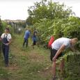 """Učenici Srednje poljoprivredno-prehrambene škole """"Stevan Petrović Brile"""" u Rumi počeli su pripremu vinove loze pred berbu grožđa. U toku je zelena rezidba, što je i prilika da učenici pokazu na […]"""
