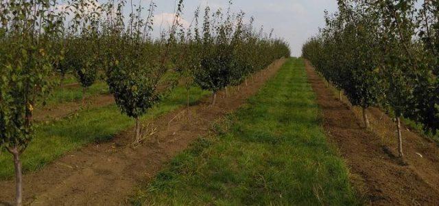 Većina voćara u Sremu, barem oni koji su imali zasade šljive, za sada su završili posao u voćnjaku. Očekuje ih zimsko prskanje, a u međuvremenu sumiraju se rezultati ove proizvodne […]