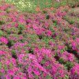 Proizvodnja cveća bi mogla da ima značajno mesto u povećanju privredne aktivnosti Srbije, jer naša zemlja raspolaže pogodnim prirodnim uslovima. U prilog tome govori činjenica da Srbija, uz Francusku, ima […]